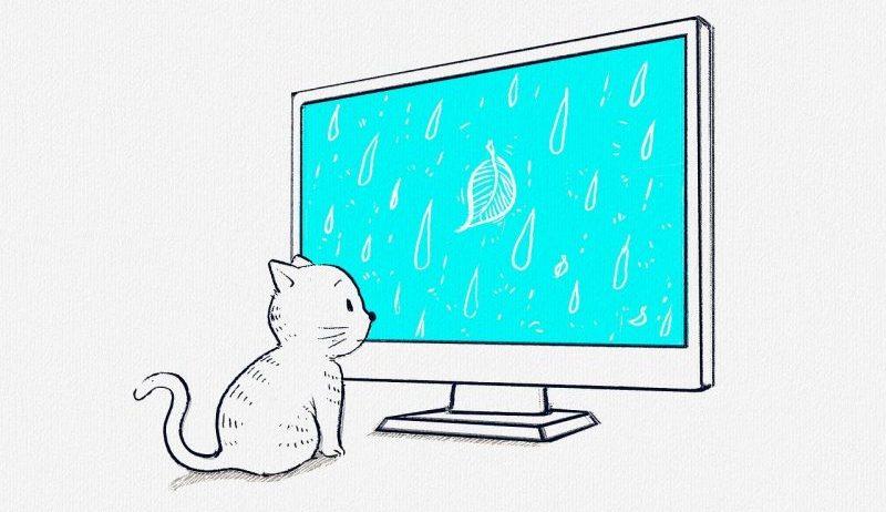 動画をみる猫